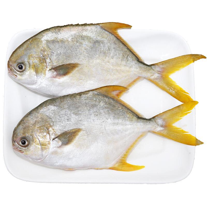 翔泰 冷冻无公害金鲳鱼 900g 2条出口欧美 深海大牧场 火锅烧烤食材 BAP认证全程可追溯含Ω3